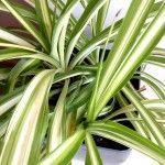 Cамые полезные комнатные растения