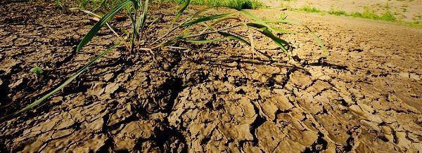Чем подкислить почву для гортензий