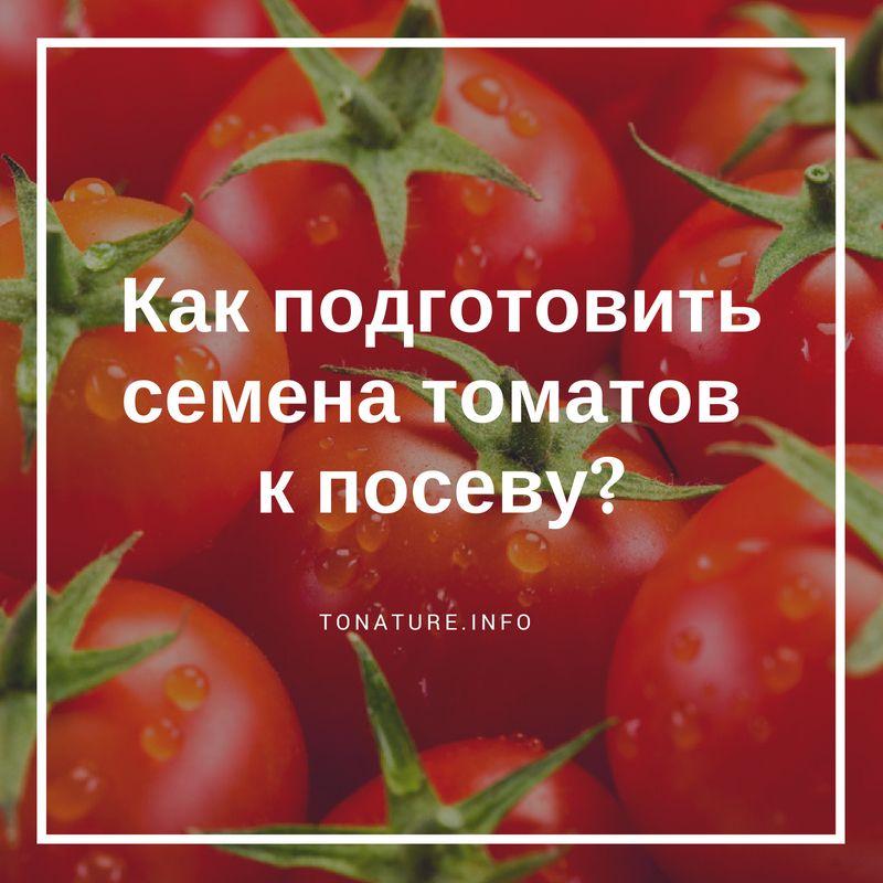 Как подготовить семена помидоров к посадке на рассаду