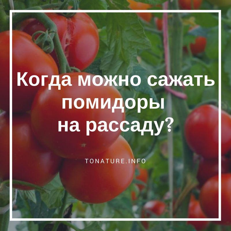 Когда можно сажать помидоры дома 75