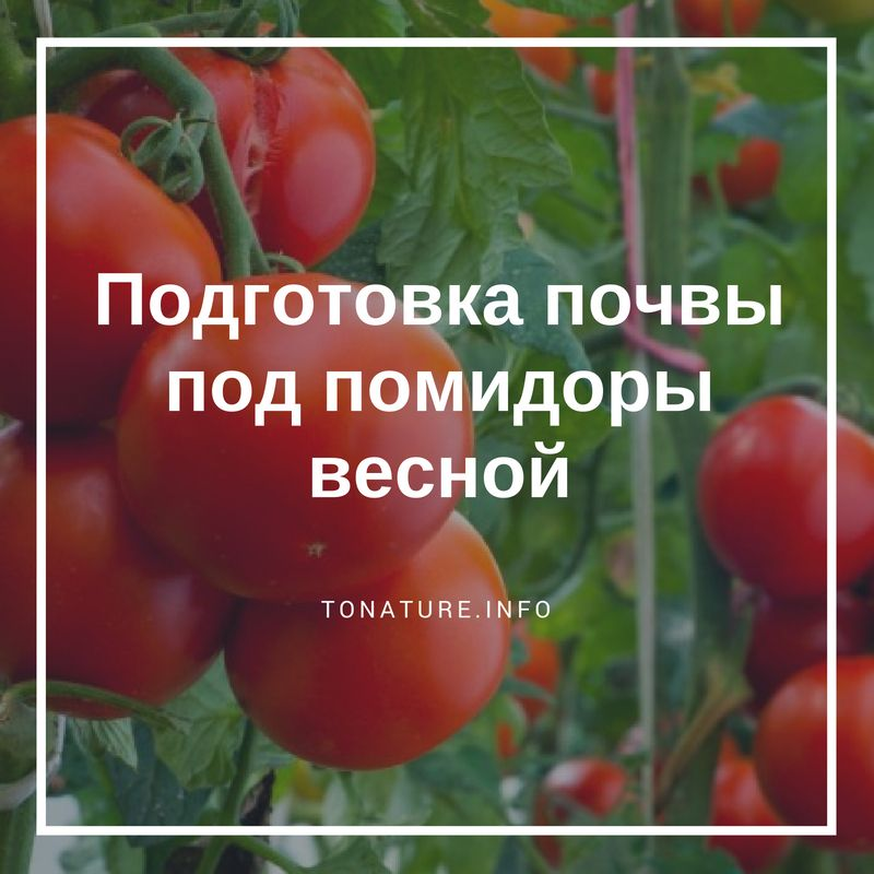 Как весной подготовить грядку под томаты