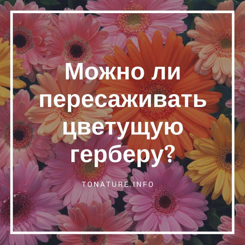Можно ли пересаживать цветок. Можно ли во время цветения пересаживать орхидею? Пересаживают ли цветущую орхидею