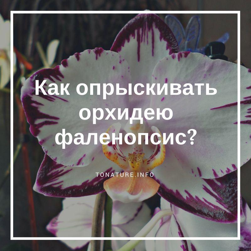 Можно ли опрыскивать орхидею во время цветения — cvetokvgorshke
