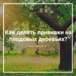 Как делать прививки на плодовых деревьях?